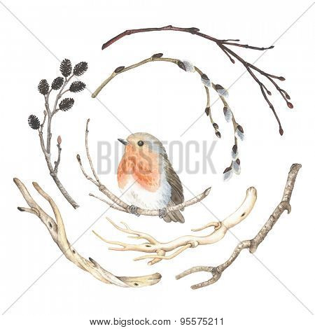 Collection of watercolor branches and bird Robin (Erithacus rubecula), vector illustration in vintage style.