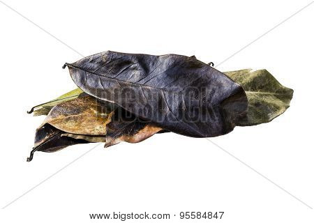 Dry Guyabano Leaf Isolated