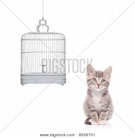 View Of A Cat And An Empty Bird Cage