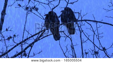 Birds crow sitting on a branch in the rain.