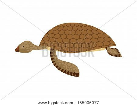 Sea Turtle Isolated. Water Reptile On White Background