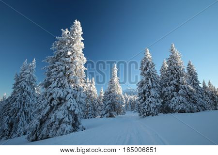 Winter scenery on the background of a cloudless sky
