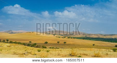 The mountain landscape of Northern Tunisia with the yellow fields and olive orchards on the background.