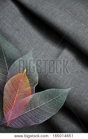 Top of colorful skeleton leaves in heart shape on gray background