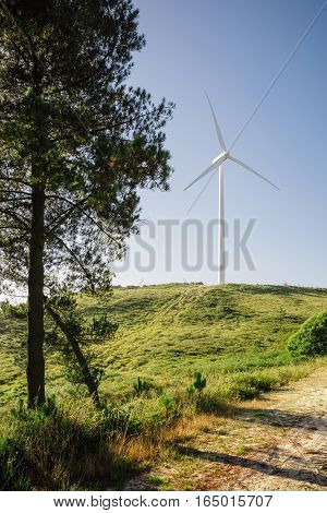 Forest landscape on a sunny day with wind turbine generating electricity in the background. Nature and ecological energy production concept.