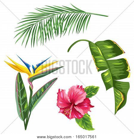 Tropical leaves and flowers set. Palms branches, bird of paradise flower, hibiscus.