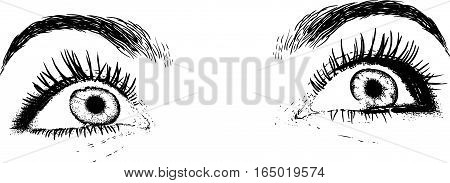 eyes beautiful young girl painted like an engraving. Isolated on white background