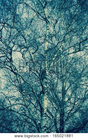 Tree Branches Without Leaves Retro