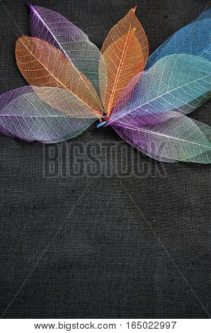 Colorful skeleton leaves on black background with empty space for text
