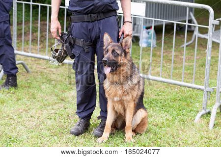 Police officer with a German Shepherd dog