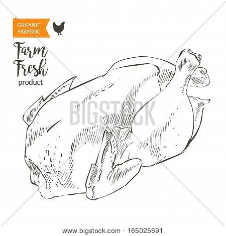 Fresh row chicken meat. Top view. Isolated on a white vintage vector isolated sketch hand drown drawing on the blackboard