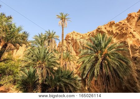 Mountain oasis Chebika at border of Sahara, Tunisia, Africa