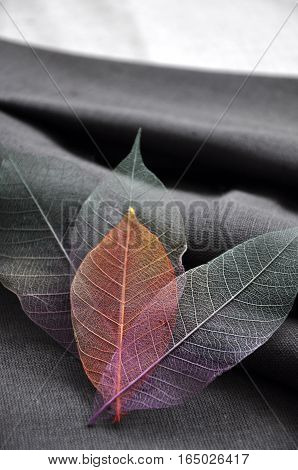 Shade of skeleton leaves on gray fabric background