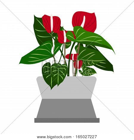 Spathiphyllum Houseplant. Home flowers made in flat style. Vector illustration.