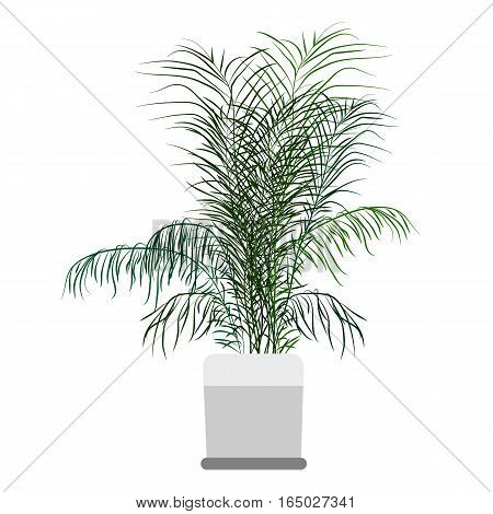 Palma houseplant. Home flowers made in flat style. Vector illustration.