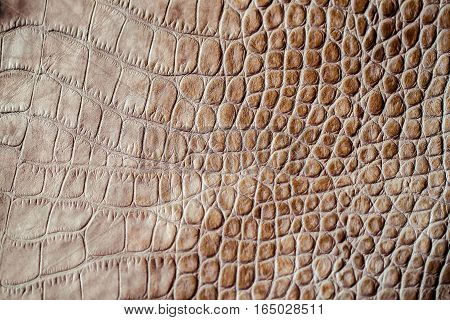 Brown scales macro background, embossed under the skin of a reptile. Texture of genuine leather close-up