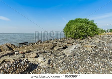 A scene of gravelrocks and bush in front of the sea