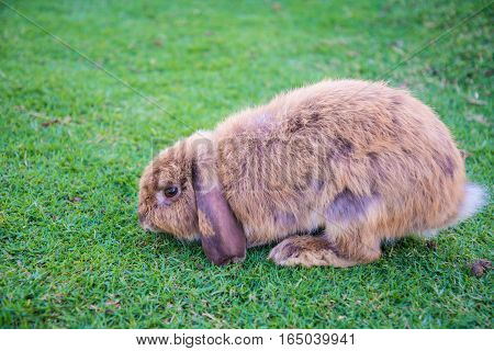 Rabbit Is In The The Lawn