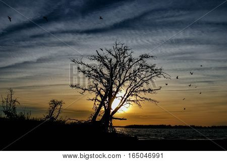 Silhouette of a tree at sunset over a lake.