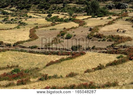 Meadows, Fields and Agriculture Farms in Ethiopia