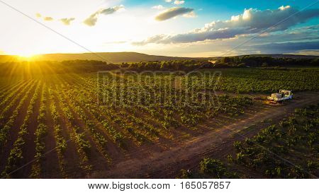 aerial view of a vineyard, backlit by the setting sun