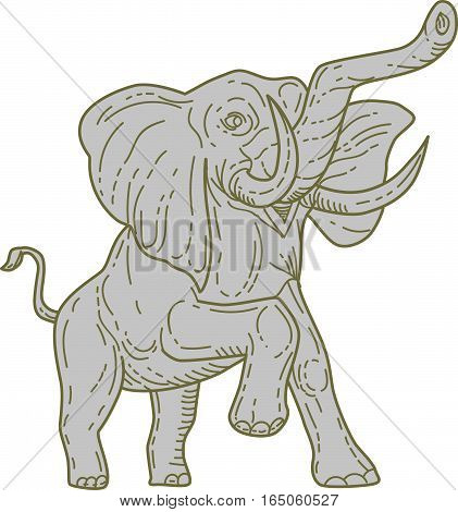 Mono line style illustration of an african elephant prancing viewed from front set on isolated white background.