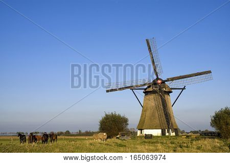 Horses and sheep in front of the Oude Doornse mill near Almkerk in the Dutch province Noord-Brabant