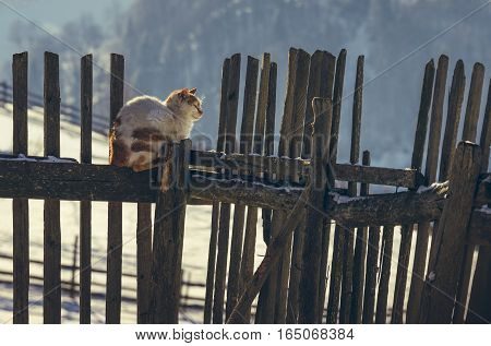 Brown spotted cat resting on an old rustic wooden fence in the warm sunlight of a winter morning.