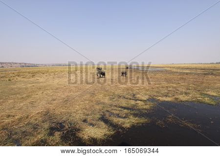 Wide Angle Photography African Landscape with elephants. Wild Image