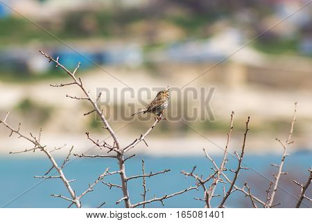 Small songbird on a branch with buds