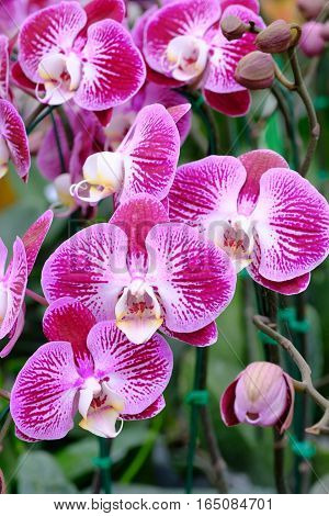 beautiful purple orchid  in the big garden