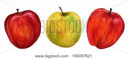 Three bright watercolour apples, isolated on a white background