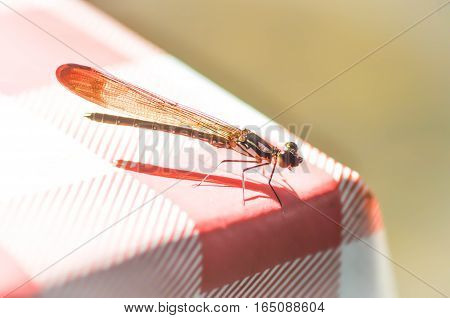 a dragonfly on the table ,  dragonfly