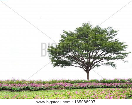 Big green tree and flower fields isolated on white background