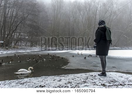 A young woman feeding on a lake swans and ducks Bird feeding in winter 3