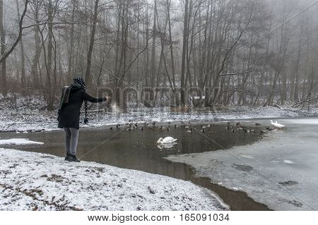 A young woman feeding on a lake swans and ducks Bird feeding in winter 7