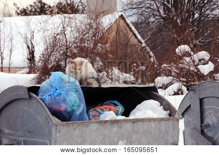 VETRINTSI VILLAGE BULGARIA - JANUARY 12 2017: Stray cat sits on the garbage container on the winter day