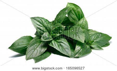 Fresh Fragrant Thai Basil, Paths