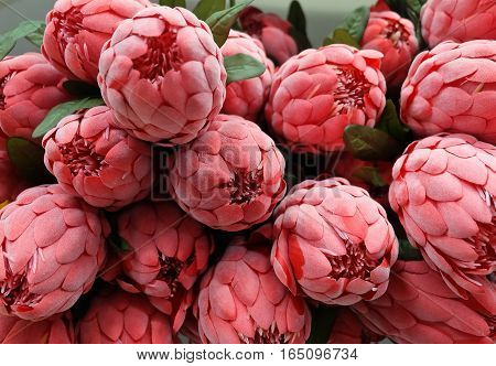 Close Up Bunch of Red Artificial Protea Aristata Flowers for Home and Building Decoration.