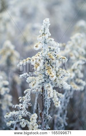 Romantic winter scene plant frozen in ice crystal beautiful nature background