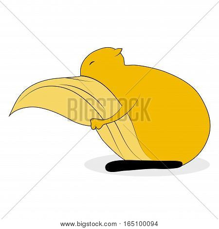 Squirrel cute cartoon. Squirrel vector isolated illustration