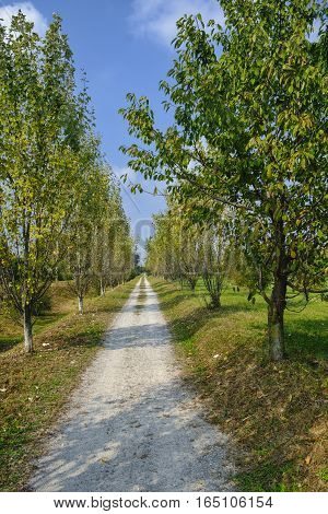Park of Grugnotorto (Lombardy Italy) between Milan and Brianza in autumn. A path for bicycle and pedestrians