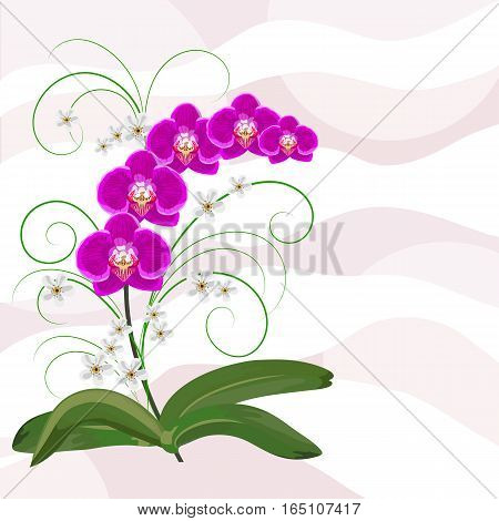 Beautiful violet orchids and white flowers on waved pastel background. Vector illustration.