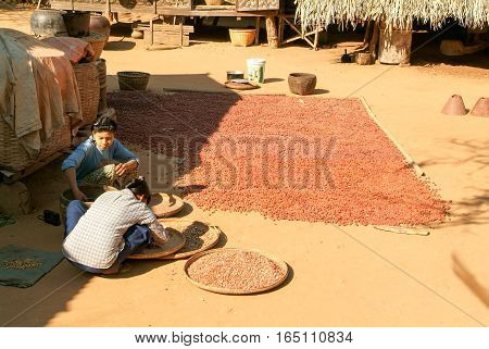Minnanthu Myanmar - 24 January 2010: Two woman on the elaboration of drying seeds at the village of Minnanthu near Bagan on Myanmar
