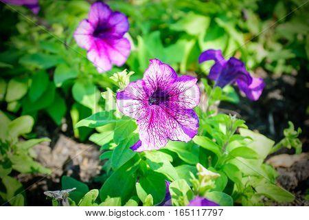 Closeup of purple flowers blooming beautifully surge.