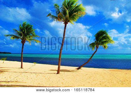 palm trees on white sand of idyllic paradise beach