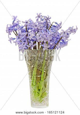 Blue Hyacinthus Orientalis Flowers (common Hyacinth, Garden Hyacinth Or Dutch Hyacinth) In A Transpa