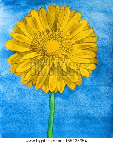 Yellow gerbera flower on blue background, watercolor painting.