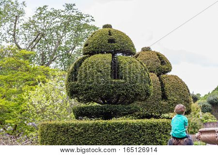 Topiary, beautifully manicured hedge. Took this shot at a National Trust house and grounds in early summer.