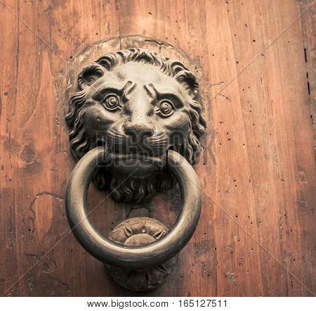 Lion door knocker on a door in Florence